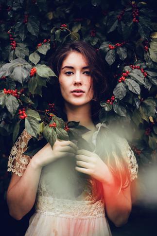 Red Berry Bush Kansas City Model Bella Donna