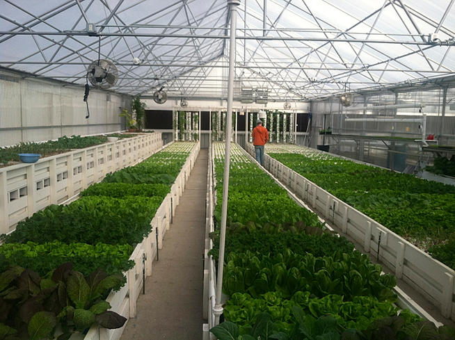 7 Tips For Aquaponics Greenhouse Design Frosty Fish
