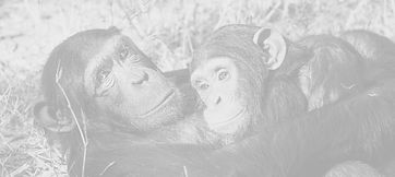 chimps%252520hugging_edited_edited_edite