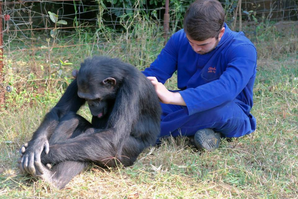Something totally new, leave your daily grind behind. Chimpanzee Sanctuary