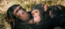 chimps hugging.jpg