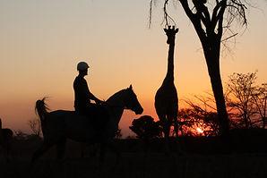 Safari Stables Project