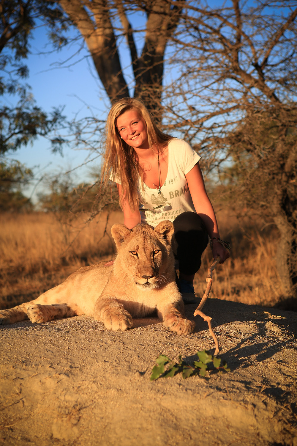 The stuff dreams are made of? Only if you do not make them your reality. Lion Rehabilitation and Release Project