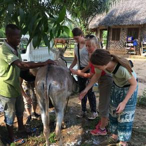 Experience Zanzibar Clinic