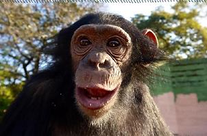 Chimpanzee Sanctuary
