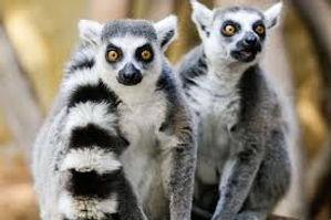 Madagascar Wildlife Conservation