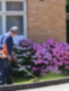 garden maintenance - brush cutting lawns