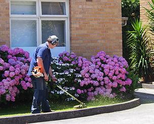 Gardener cutting grass in front of garden bed