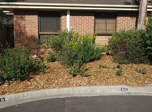 Mulch spread in a native Australian garden bed