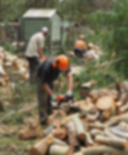 Tree removal ground crew chopping up wood with chainsaws
