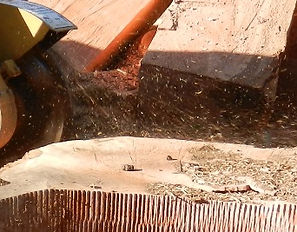 Chipping up tree stump with stump grinder