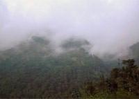 Legendary Coffee - Jamaica Blue Mountain