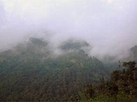 100% Jamaica Blue Mountain Clydesdale Grade 1