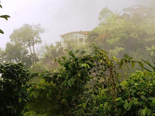 Guatemala Huehuetenango Finca La Bendicion