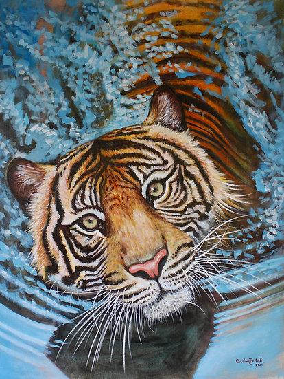 """Presence""- Bengala Tiger"