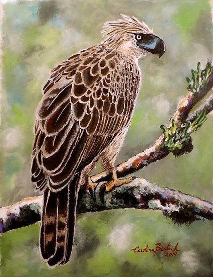 """Philippine Eagle"""