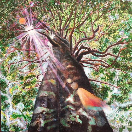 """""""Árvore Radiante II """" / """"Radiant Tree II"""""""