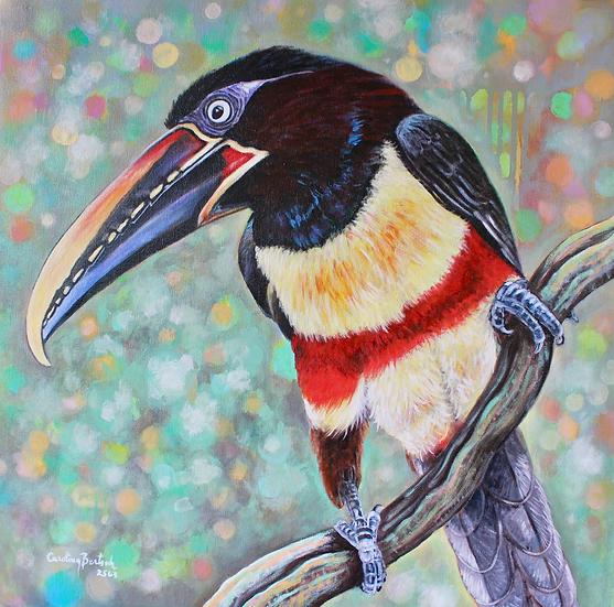 """Chestnut-eared aracari toucan"""