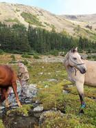 Horseback riding in the Coastal Mnts