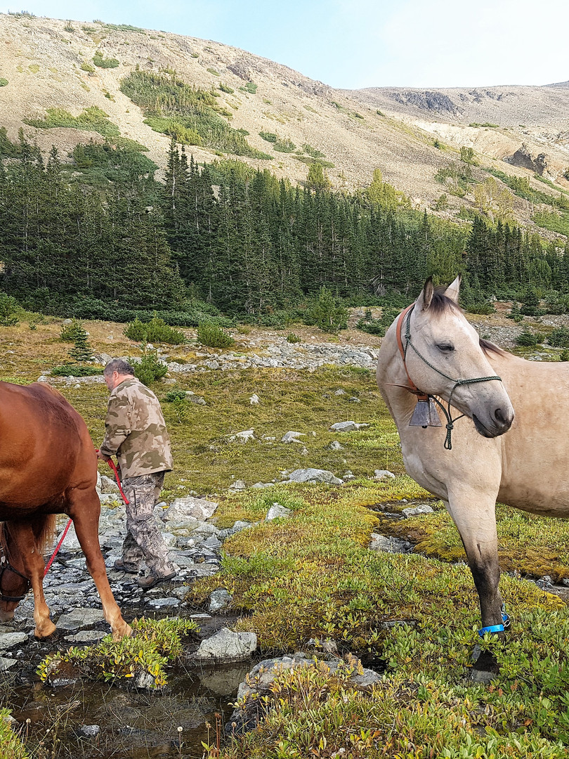 Horseback riding in the Coastal Mnts