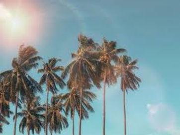 Palms Sunset.jpeg