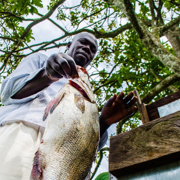 Fisherman displays his catch at Lutoboka