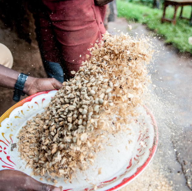 Winnowing, part of the Coffee processing