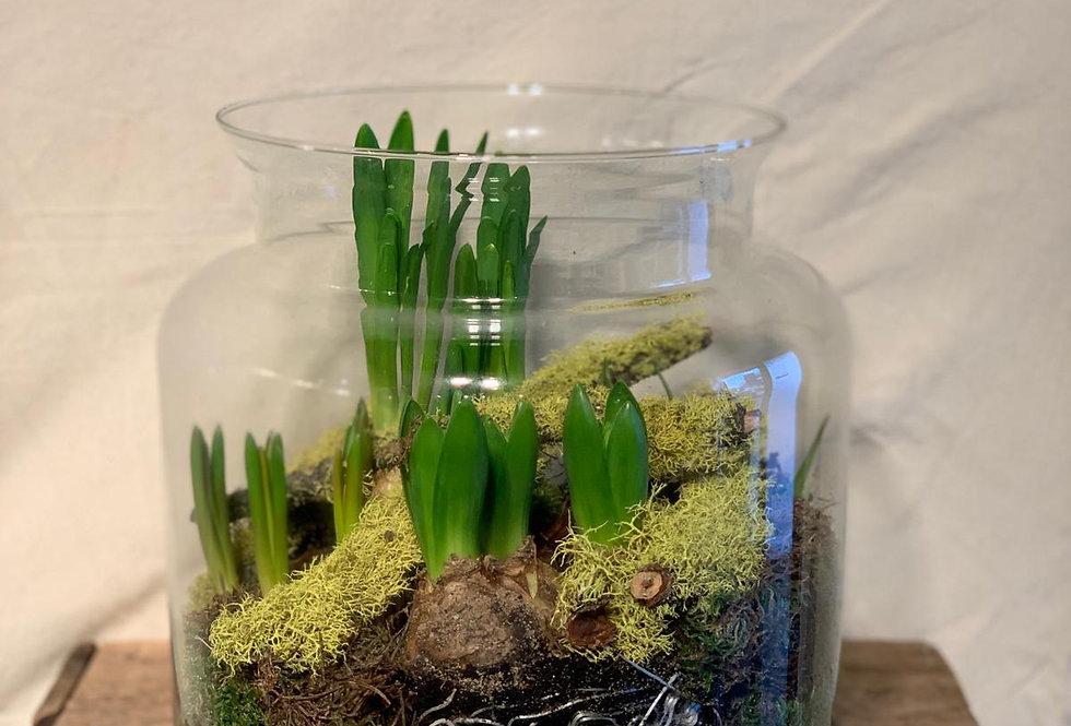 voorjaars bollen in glas
