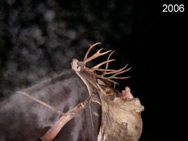 mule-deer-hunt2006-02.jpg