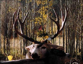 mule-deer-b4-2005-34.jpg
