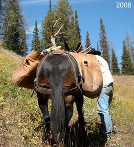 mule-deer-hunt2008-09.jpg