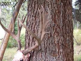 mule-deer-hunt2007-25.jpg