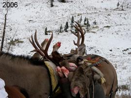 mule-deer-hunt2006-05.jpg