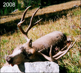 mule-deer-hunt2008-22.jpg