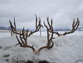 mule-deer-hunt2013-18.jpg