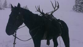 mule-deer-hunt2013-38.jpg