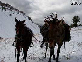 mule-deer-hunt2006-06.jpg