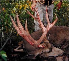 mule-deer-b4-2005-38.jpg