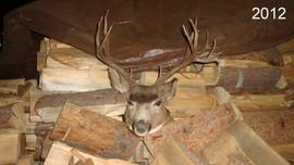 mule-deer-hunt2012-55.jpg