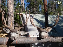 mule-deer-hunt2012-53.jpg