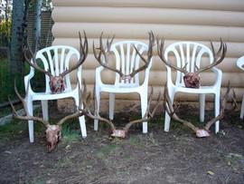 mule-deer-b4-2005-12.jpg