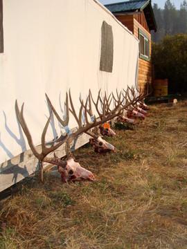 mule-deer-hunt2012-59.JPG