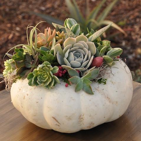 SOLD OUT Succulent Pumpkin Workshop - October
