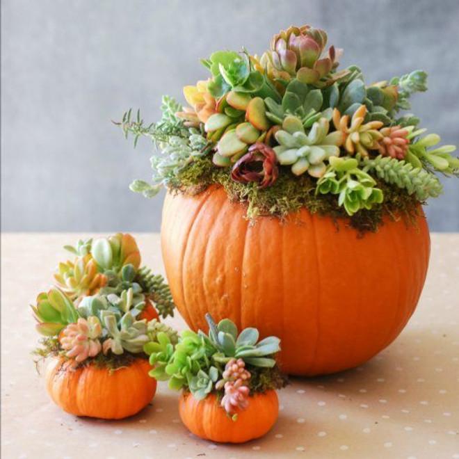 SOLD OUT Succulent Pumpkin Workshop - November 20th