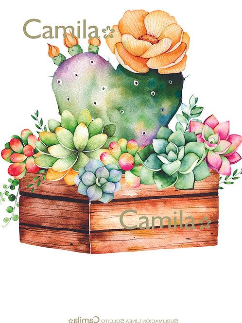 Cajón con Cactus y Suculentas S346