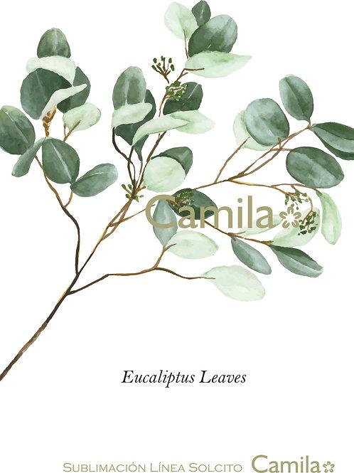 Eucaliptus2 S298