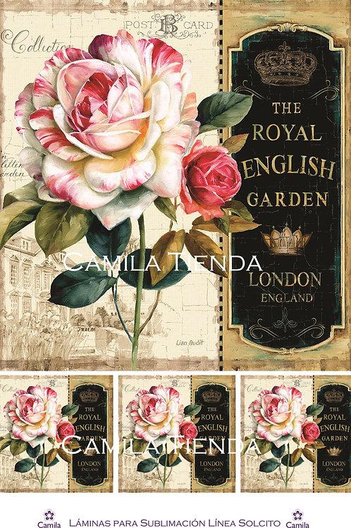THE ROYAL ENGLISH  S238