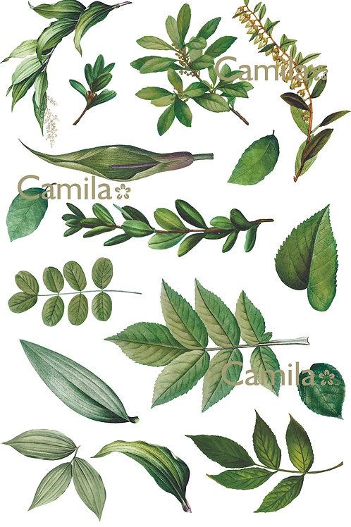 Hojas Verdes S365