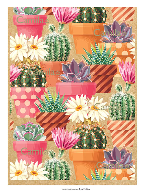 Macetas con Cactus CF113