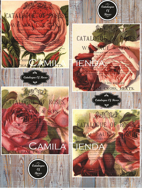 CATALOGUE OF ROSES A4 C030